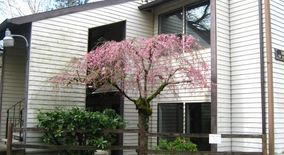 Similar Apartment at Dolph Ct. Apts 2910 2920 Sw Dolph Ct.